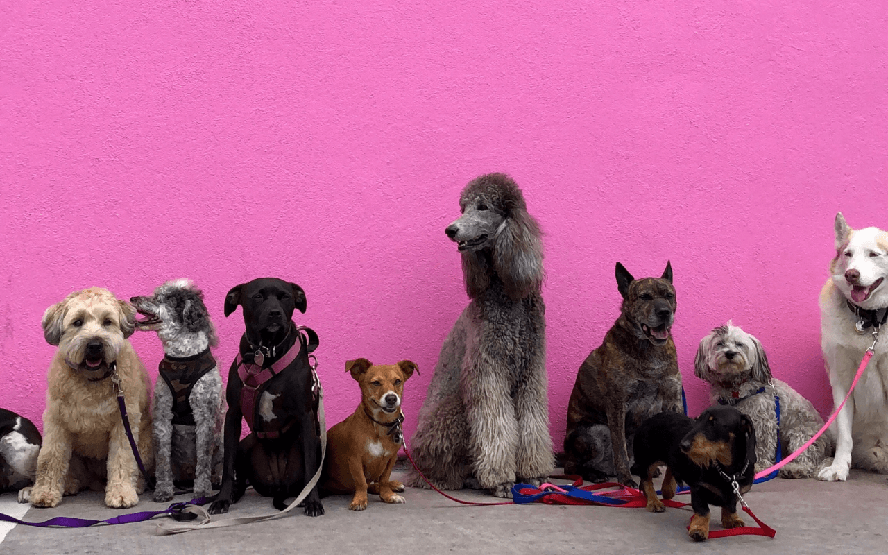 Dog-friendly workspace - Hounds of Huckletree: Several dogs standing in front of a pink background